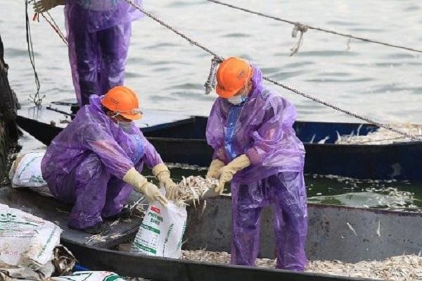 Vào ngày 10/7 vớt được 20,5 tấn cá chết ở hồ Tây