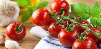 Những quả cà chua sạch thường không chín đều