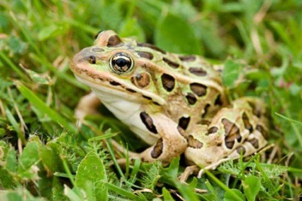 Nằm mơ thấy ếch đánh số mấy báo hiệu điềm gì?